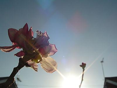 SUMMER 394